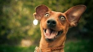 Westport Dog Learns Calm Behavior When Doorbell Rings