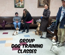 Group Dog Training Classes with Eric Letendre in Westport Dartmouth Acushnet