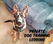 Private Dog Training Lessons with Eric Letendre in Southeastern MA