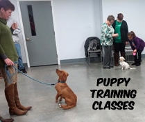 Puppy Training Classes with Eric Letendre in Westport and Acushnet