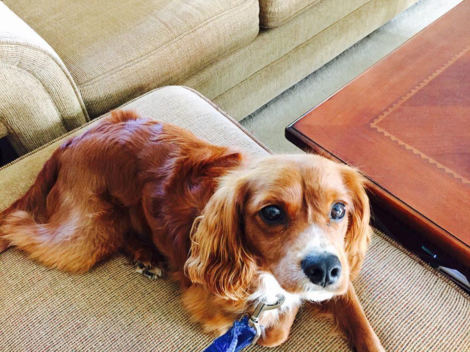 Dog Training Charlie