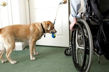 Why People Struggle With Dog Training – New Podcast