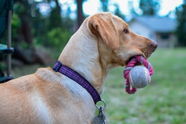 3 Magic Words To Solve All Dog Training Problems