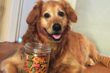 Positive Reinforcement Dog Training Has Limitations